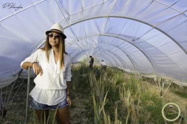 Βόλτα στο βιολογικό αγρόκτημα αλόης στο Βασιλεώνοικο της Χίου-χίος-αλόη-κάμπος