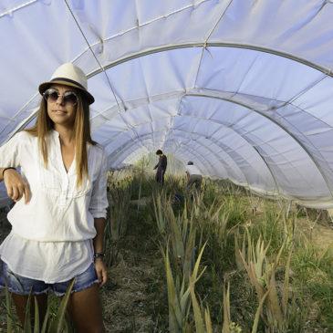 Βόλτα στο βιολογικό αγρόκτημα αλόης στο Βασιλεώνοικο της Χίου