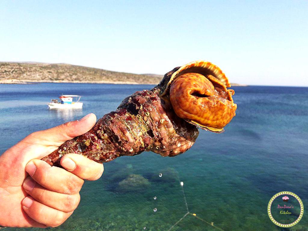 μπουρού-οι ψαράδες των μεστών-θαλασσινά-τραχήλια-χίος