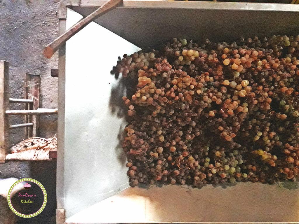 σταφύλια-τρύγος-κρασί-μεστά-χίος